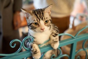 Cat standing with front paws reaching over gate